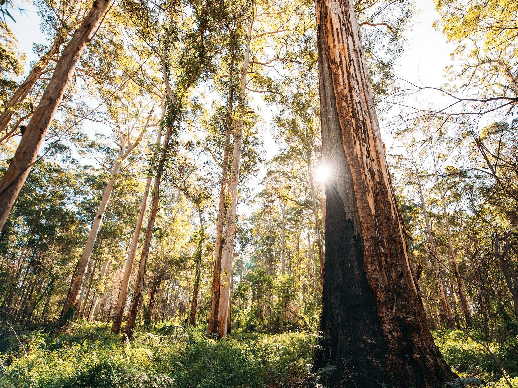 Boranup Forest-2 large